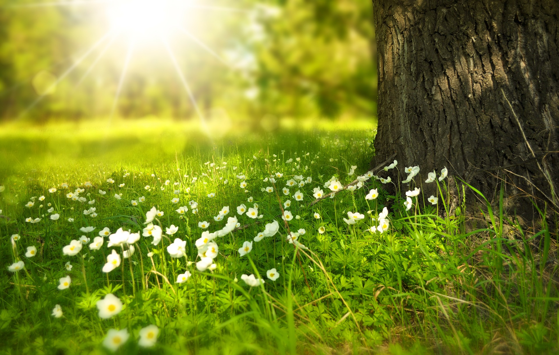 Traditional Acupuncture – Seasonal Changes – Spring and Summer