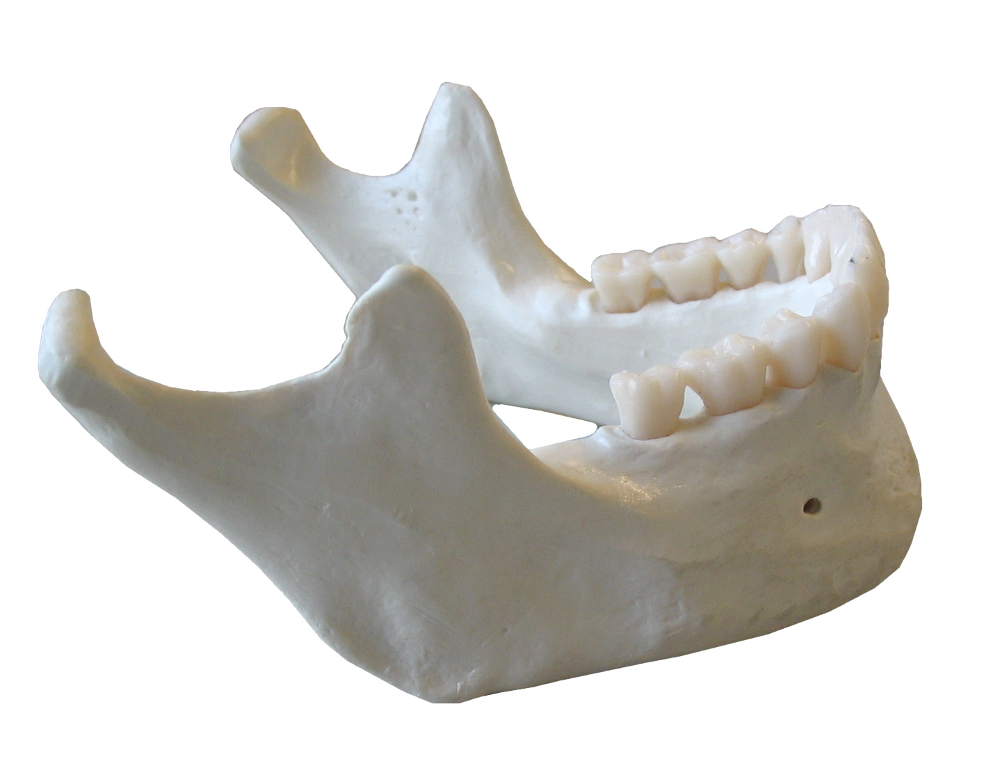 Only one person in 20 seeks treatment for their jaw pain